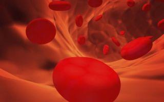 Эритроциты в моче повышены. причины у женщин, норма, таблица, лечение. о чем говорит при беременности, месячных, климаксе, цистите, после родов