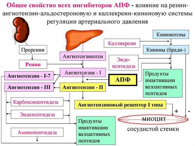 Алкоголь и капотен — Совместимость и последствия употребления с алкоголем, инструкция по применению