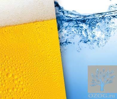 Пиво — Как перестать пить пиво каждый день: лучшие советы