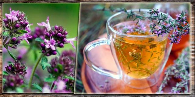 Чабрец от алкоголизма — Инструкция, полезные свойства и рецепт для лечения алкогольной зависимости