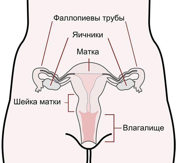Можно ли пить алкоголь после аборта? Влияние спиртных напитков на женский организм, отзывы врачей