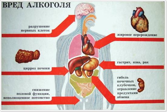Влияние алкоголя на дыхательную систему — Воздействие алкоголя на организм человека, очищение организма, препараты