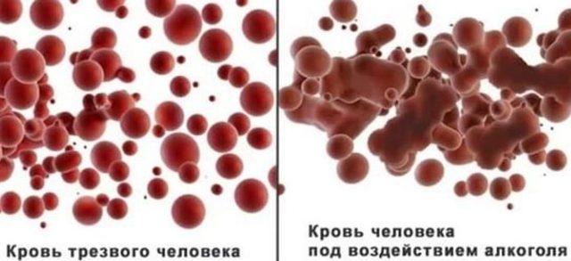 Алкоголь разжижает или сгущает кровь — Влияние алкоголя на кровеносную систему, последствия употребления спиртного