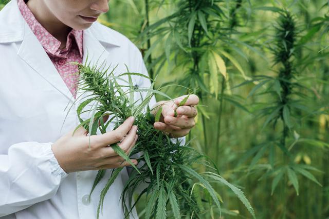 Что такое марихуана: вред, польза, последствия курения, вызывает ли зависимость