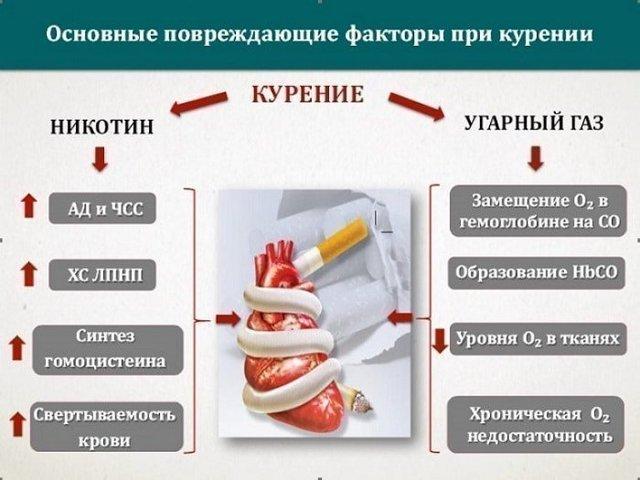 cердце курильщика: влияние курения на сердечно-сосудистую систему и возможные последствия