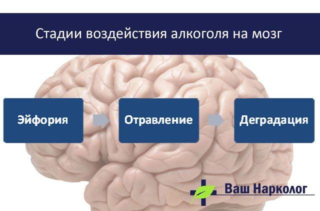 Восстановление мозга после алкоголизма — Как восстановить мозг и нервы