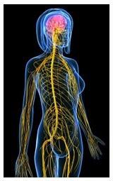 Какие изменения в процессах пищеварения вызывает алкоголь: влияние спиртных напитков на организм человека