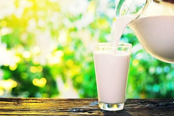 Молоко с похмелья: польза или вред, помогает ли традиционное средство