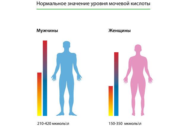 Мочевина в крови повышена. Причины, как лечить, симптомы, что это значит, диета, народные средства, лекарства