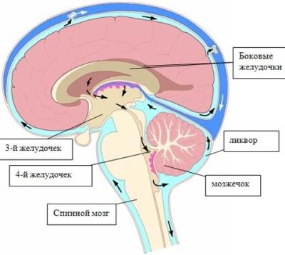 Давление у детей. Норма таблица по возрастам: внутричерепное, артериальное. Нормальное, симптомы повышенного, как измеряют до года и ребенку старше. Диагностика и лечение
