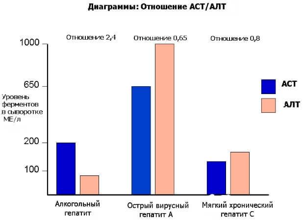 АЛТ/АСТ норма у женщин по возрасту в анализе крови из вены. Таблица обозначений, прямой и непрямой, после 50-60 лет