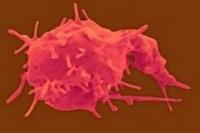 Тромбоциты повышены, понижены в крови. Норма, что это значит, как повысить, понизить уровень у взрослого, ребенка