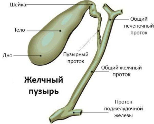Воспаление желчного пузыря. Лечение, препараты, симптомы у женщин, мужчин, диета при обострении, причины