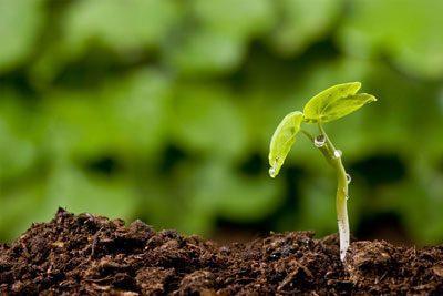 Белладонна гомеопатия. Показания к применению, фото, где растет трава, свойства растения для здоровья детей, взрослых