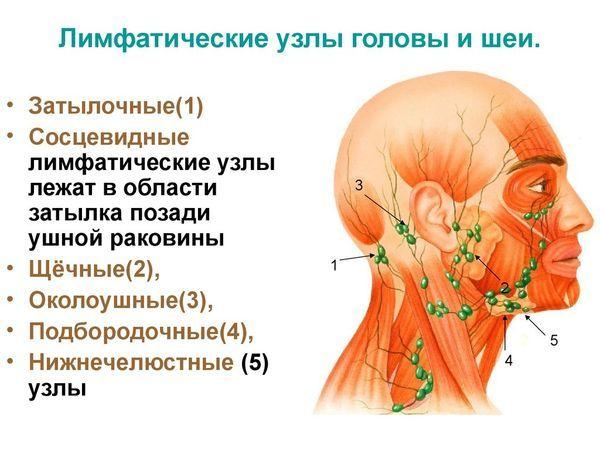 Лимфоузлы на шее увеличенные. Симптомы воспаления, причины и лечение у ребенка, взрослых. Что делать, если болят, опухли в домашних условиях