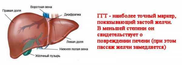ГГТ в биохимическом анализе крови повышен. Что это значит, норма у женщин, мужчин, детей по возрасту, лечение