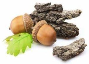 Дубовая кора. Лечебные свойства и противопоказания для мужчин, женщин в гинекологии в народной медицине