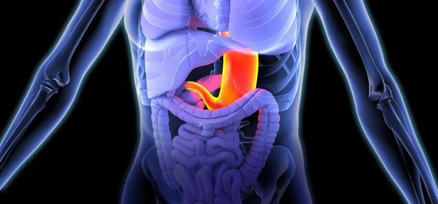Антральный отдел желудка. Где находится, что это такое, фото, анатомия, симптомы заболеваний и лечение