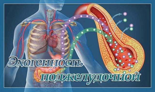 Повышенная эхогенность поджелудочной железы. Что это такое, что значит, причины и лечение