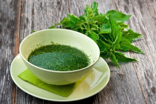 Крапива. Лечебные свойства и противопоказания, польза листьев, семян для волос, похудения, при месячных. Рецепты приготовления отвара, настойки, чай